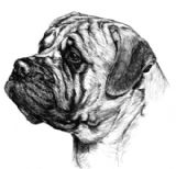 Bullmastiff Personalised Correspondence Cards with Envelopes